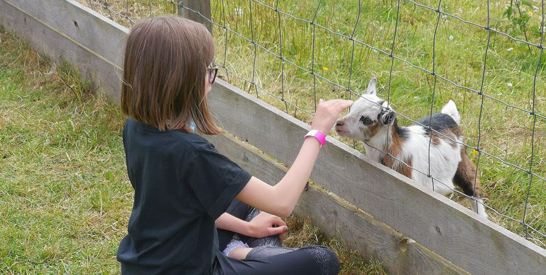 Wynford Farm Park Baby Goat