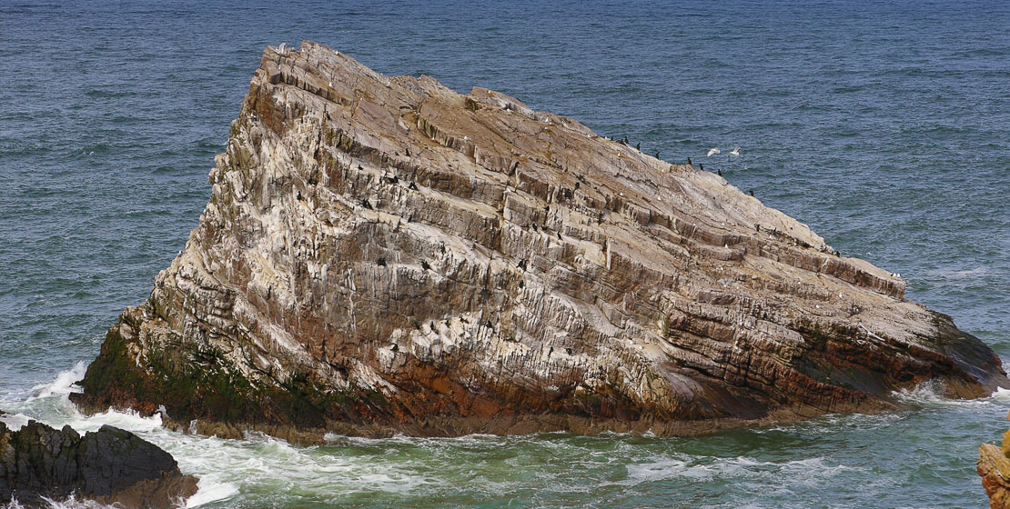 Rock stained white with bird excrement!