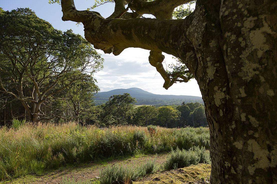 Crannoch Hill, looking back towards the Bin of Cullen