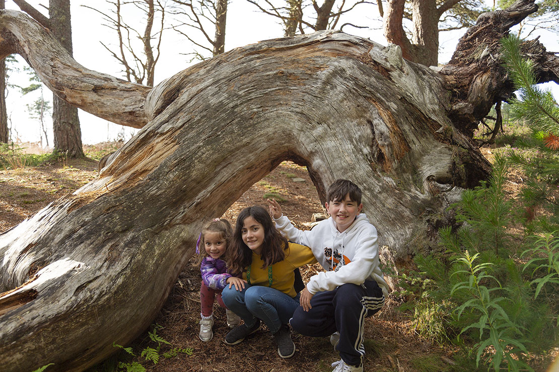 My kids and nephew at a fallen tree at Crannoch Wood.