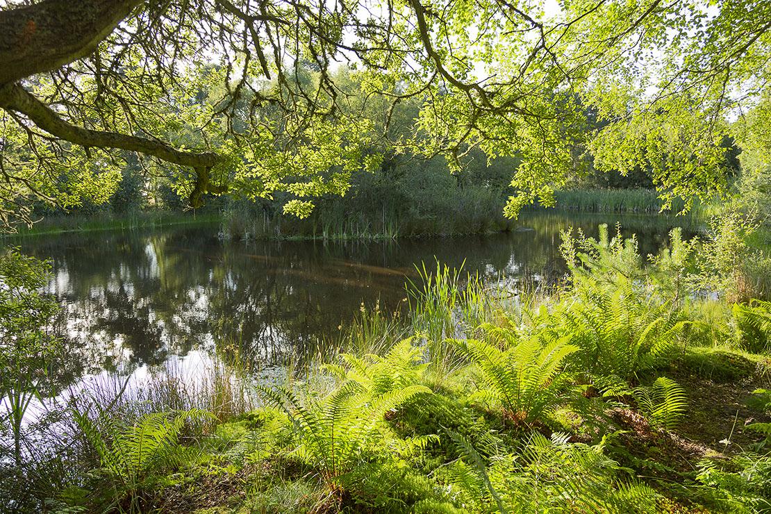 Crannoch Loch