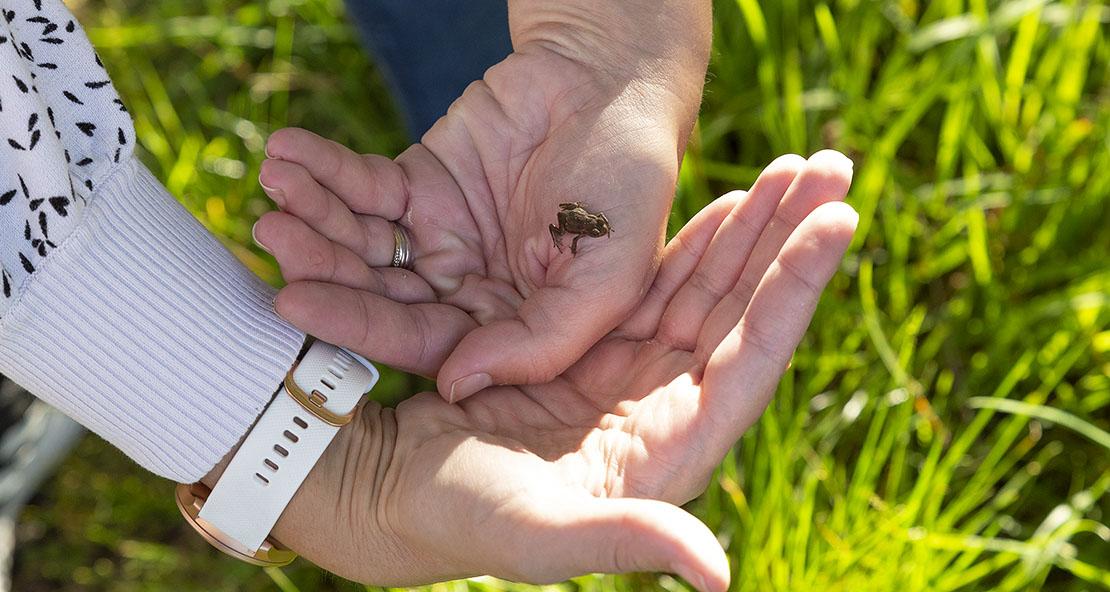 Baby frogs on Crannoch walk.
