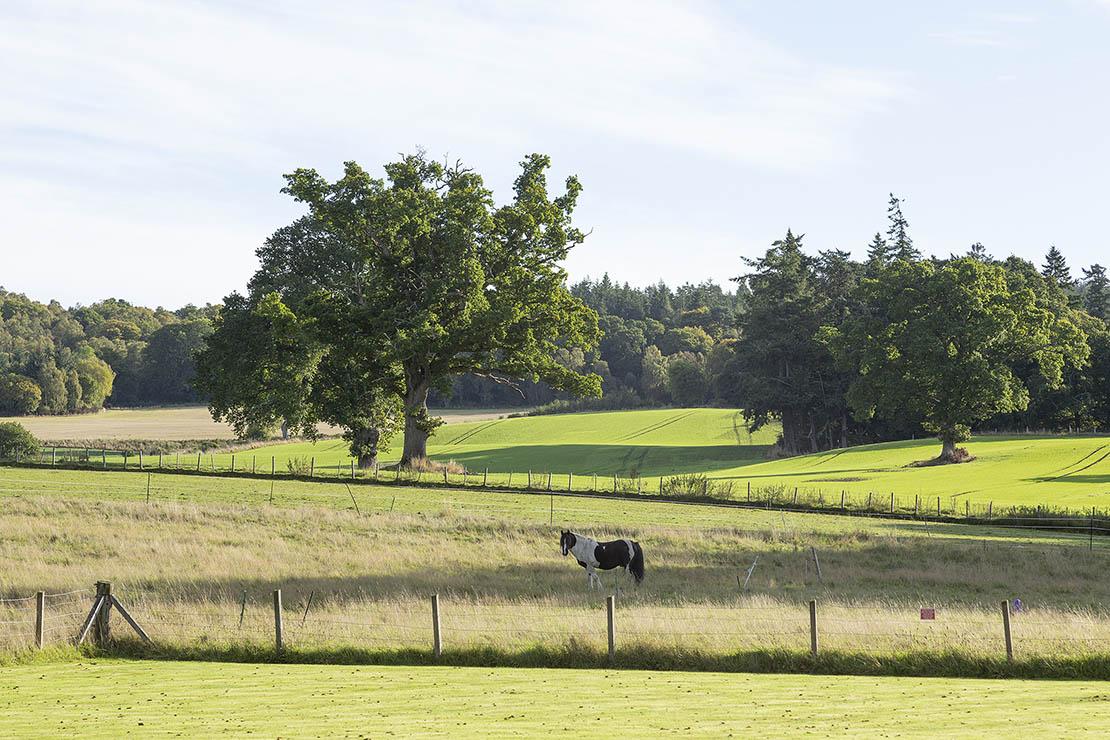 Landscape around Redcastle