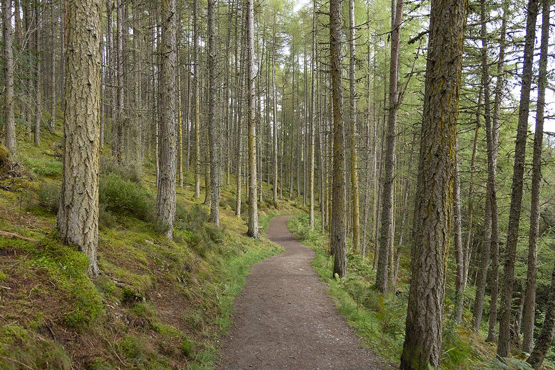 Beginning of the woodland path.