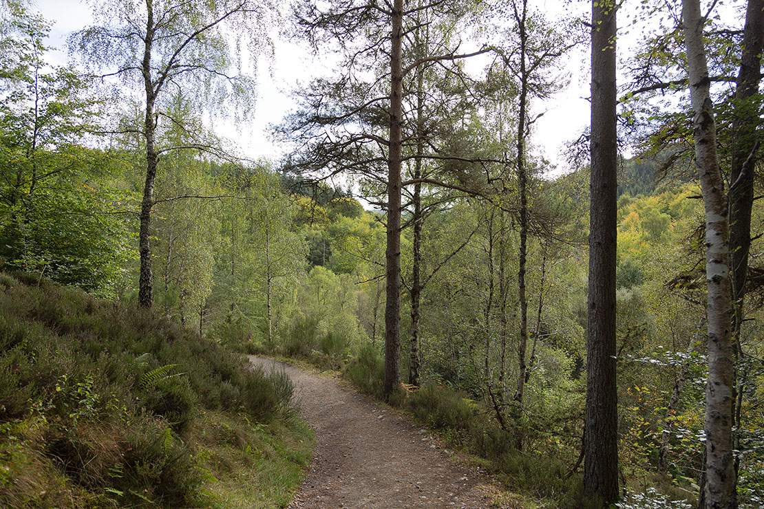A really pleasant walk through the forest.