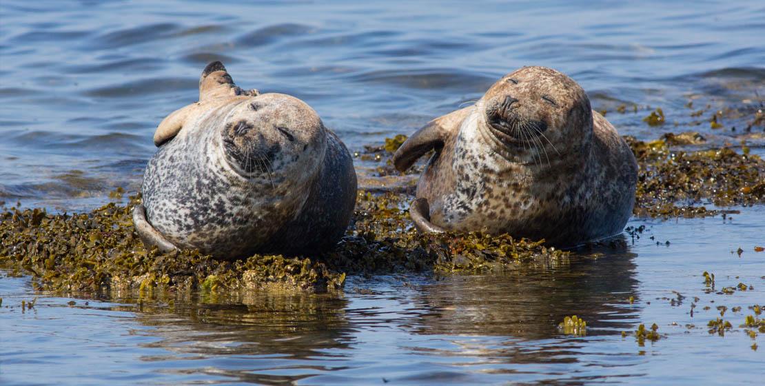 Portgordon Seals